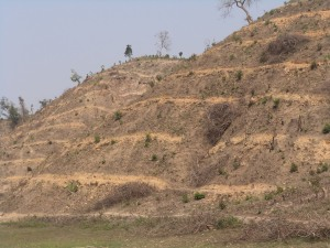 A hillock in the village cleared and being prepared for rubber plantation