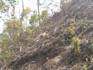 Logs and roots of feeled trees in a hillock at the village